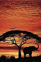 GB eye Poster maxi Coucher de soleil sur la savane 61 x 91,5 cm