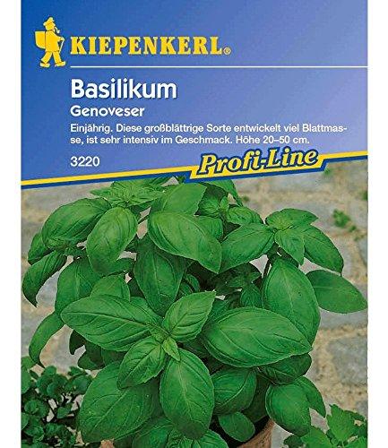 Basilikum 'Breitblättrig',1 Portion