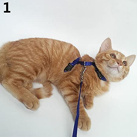 gohigher Verstellbares Hundegeschirr Halsband Leine Traction für Katzen Welpen Nylon Sicherheits-Seil Set