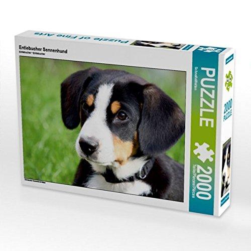 CALVENDO Puzzle Entlebucher Sennenhund 2000 Teile Lege-Größe 90 x 67 cm Foto-Puzzle Bild von SchnelleWelten