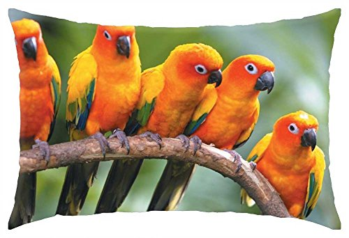 iRocket - Sun Conure Parrots - Throw Pillow Cover (24