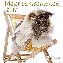Meerschweinchen 2017 Postkartenkalender