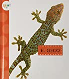 El Geco (Geckos) (Spot Animales del Patio / Spot Backyard Animals)