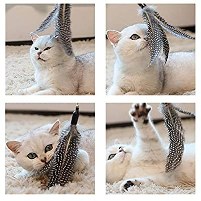 URCGP 8 Pieces of Cat Toy Cat Feather Toy Intelligent Toy Interactive Pen Teaser with a telescopic Pole with 7 Spare Nibs for Cats Kitty by URCGP