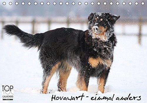 hovawarte-einmal-anders-tischkalender-2017-din-a5-quer-hovawarte-hunde-mit-vielen-gesichtern-monatsk