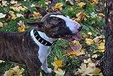 Echt Leder, Hundehalsband, Hand Made, Spikes, französische Bulldogge Motiv: Frenchie