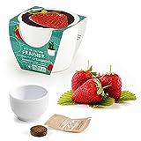 Monsterzeug Erdbeere im Mini-Keramiktopf, Mini-Erdbeere Anzuchtset, Strawberry Seeds, Pflanzen selbersäen, Erdbeerpflanze anbauen, Weiß