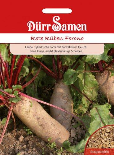 Dürr Samen 0595 Rote Rübe Forono (Rübensamen)