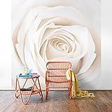 Apalis Rosen Vliestapete - Blumentapete Pretty White Rose - Blumen Fototapete Quadrat | Vlies Tapete Wandtapete Wandbild Foto 3D Fototapete für Schlafzimmer Wohnzimmer Küche | Größe HxB:240x240cm