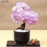 Shoopy Star 10 Stück Lila japanischen Sakura Bonsai Mini Baumsamen Echt Oriental