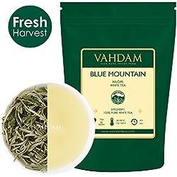 Exotische Weißer Tee Lose von den Blauen Bergen (25 Tassen) | 100% Reiner Weißer Loser Blätter Nilgiri Tee | KRAFTVOLLE ANTIOXIDANTIEN | Weißer Tee Aromatisiert | White Tea | 50g