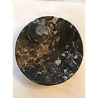 gemeißelt Fossil Gericht aus Paläozoikum Zeitraum 400Millionen years- 12cm preisvergleich bei billige-tabletten.eu