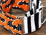 Martingal Hundehalsband: Bats, von Hand gefertigt in Spanien von Wakakán