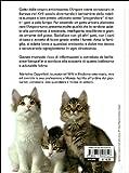 Image de Il gatto angora turco. Storia, caratteristiche, cure quotidiane