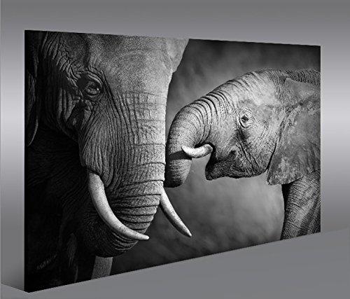 Cuadro en Lienzo Elefanten V2 1p Elefantenbaby Impresión sobre lienzo - Formato...