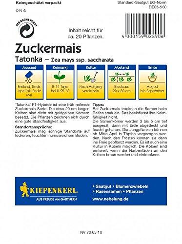 Maissamen – Zuckermais Tatonka von Kiepenkerl