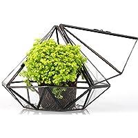Diamante Vetro Piante Felce geometrico terrari muschio da tavolo per piante terrario scatola chiusa con porta Rettile Insetti Especial per Raising Muschio 14cm altezza 16cm di larghezza