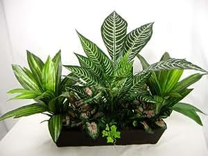 50cm 'Rex' Verdure zébrée Plante en soie artificielle