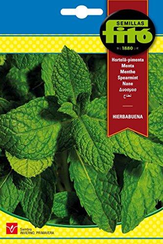 semillas-fit-6234-hierbabuena
