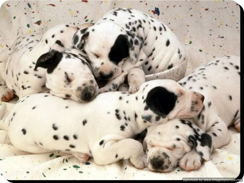 Dálmata posavasos de madera–regalo único para todos los amantes del perro 101