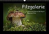 Pilzgalerie - Heimische Pilze aus der Region Rheinland-Pfalz (Wandkalender 2018 DIN A3 quer): 13 beeindruckende Pilzaufnahmen