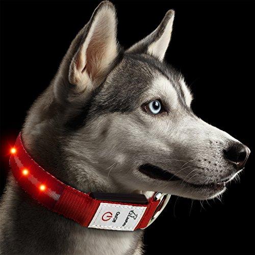 Hunde Leuchthalsband LED Blinkhalsband Leuchtendes Halsbänder, JuzPetz Wiederaufladbare LED Hunde Sicherheits Halsband Hundehalsband Leuchtender Nacht Hundeband Reflektierende, blinkende sichtbare Kragen [Wasserbeständigkeit | 3 leuchtende Modi | Schnelle Freigabe Wölbungs] Einstellbare Hellem Halsband für Haustier mit USB Ladekabel - Mittel [34-47 cm] - Rot