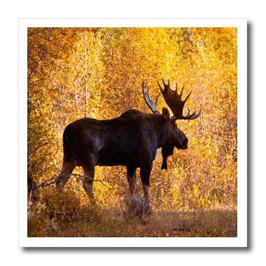 Bull Buchstützen (3dRose Moose Bull in Golden Weiden. Buchstützen auf Wärmeübertragung, 10von 25,4cm für weiß Material (HT 191442_ 3))