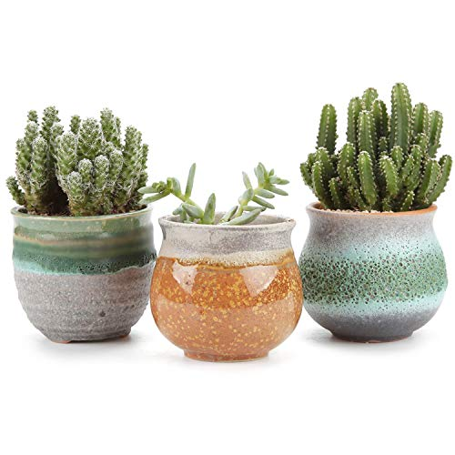 T4U 7CM Keramik Sukkulenten Töpfe Kaktus Pflanze Töpfe Mini Blumentöpfe Sommer-Trio Serie 3 Stücke Set