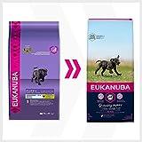Eukanuba Puppy Large Breed Trockenfutter (für Welpen großer Hunderassen, Premiumnahrung mit Huhn), 15 kg Beutel - 8