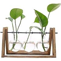 SODIAL Terrario de planta con soporte de vaso de vidrio de soporte de madera para la