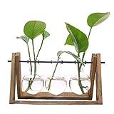 SODIAL Pflanzen Terrarium mit Holzstaender Glasvase Halter fuer Heimtextilien, Scindapsus Container (3 Terrarien)