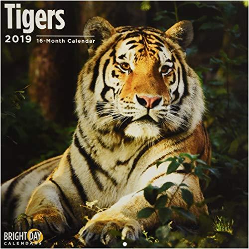 Tigers 2019 (ANIMALS)