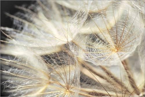 Acrylglasbild 90 x 60 cm: Pusteblume Natur von Julia Delgado - Wandbild, Acryl Glasbild, Druck auf Acryl Glas Bild