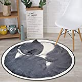 WANGXN Rund Teppich Graue Katze Cartoon Easy to Clean-Fleck-Baby-Spiel-Matte für Kinder Rund Teppich Rund Vorleger,80cm