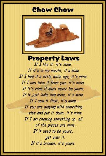 chow-chow-laminato-a4-cartello-proprieta-leggi