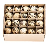NaDeco Wachteleier Natur 60 Stück | Wachtelei | Wachtel Eier | Dekoeier | Ostereier | Osterdeko | kleine Dekoeier
