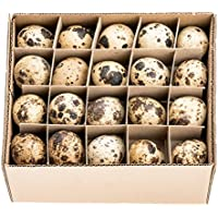 NaDeco® Wachteleier natur 60 Stück   Wachtelei   Wachtel Eier   Dekoeier   Ostereier   Osterdeko   kleine Dekoeier
