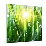 Glasbild - Gras II - 20x20 cm - Deko Glas - Wandbild aus Glas - Bild auf Glas - Moderne Glasbilder - Glasfoto - Echtglas - Kein Acryl - Handmade