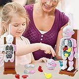 atteryhui de 4D zusammengesetztes Modell Menschlicher Körper Modell Lernspielzeug Kinder Kinder Desktop-Spiel Modell Durable