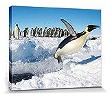 1art1 86685 Pinguine - Freuden-Sprung Poster Leinwandbild Auf Keilrahmen 50 x 40 cm