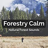 Forestry Calm