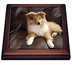 3dRose trv_4546_1 rough Collie Puppy Trivet with Ceramic Tile, 8 x 8, Natural