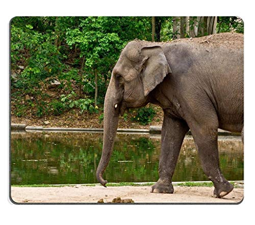 Naturkautschuk-Gaming-Mousepad niedlicher Asien-Elefant in Safari Thailand (Mauspad/Gaming-Mauspad)