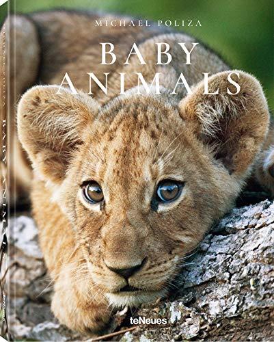 Baby Animals - Die schönsten Fotos afrikanischer Tierkinder in einem Buch vesammelt (Deutsch, Englisch, Französisch) - 14,6x18,7 cm, 160 Seiten