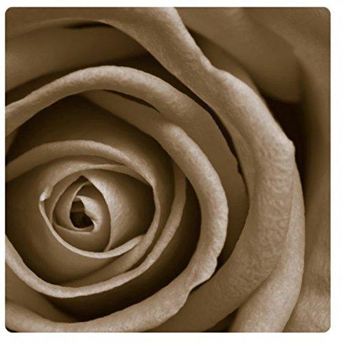 1art1 Blumen - White Big Rose Acrylglas-Bild 19 x 19 cm