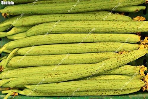 40 pcs / sac exotique serviette Gourd Graines d'extérieur bio long Luffa cylindrica éponge Bonsai Plante en pot facile à cultiver
