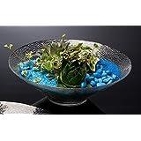 Cristal Carcasa Dish Garden–Plato Cristal (Cuenco decorativo (redonda, diámetro de 28cm