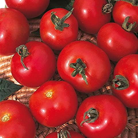 Buttacup Graines de tomates Moneymaker - Lot de 75 graines
