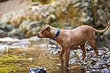 EzyDog Neo Classic Hundehalsband | Neopren Gepolstert | Halsband Hund für  Große, Mittelgroße, Mittlere und Kleine Hunde Größen | Reflektoren für Perfekte Sichtbarkeit (XS, Blau)