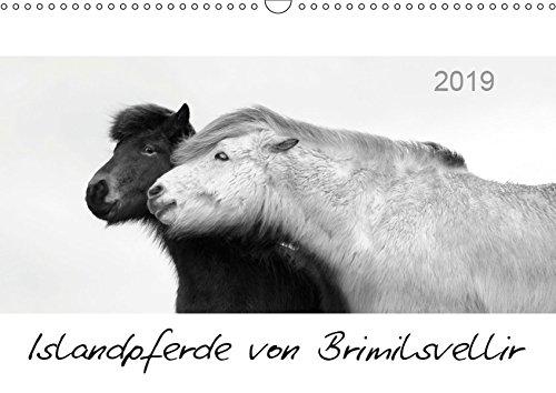Islandpferde von Brimilsvellir (Wandkalender 2019 DIN A3 quer): Islandpferde von Brimilsvellir (Monatskalender, 14 Seiten ) (CALVENDO Tiere)